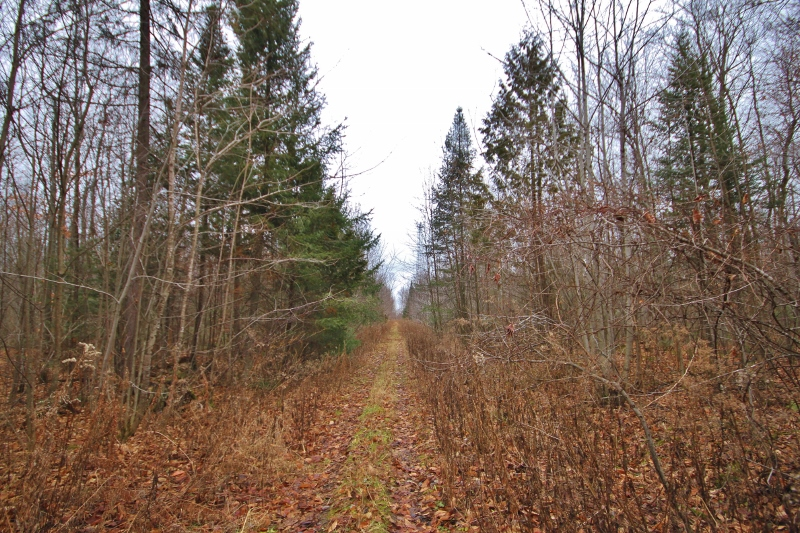 Loads of cleared trails that are perfect for 4x4, dirtbikes and quads.  Enjoy this piece of land before you develop!