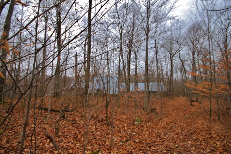 The old Sugar Camp Structures.  Lots of tin, old barn boards, and other items that could be of use.