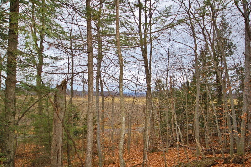 With some clearing, you have some exceptional views of the Gatineau hills.
